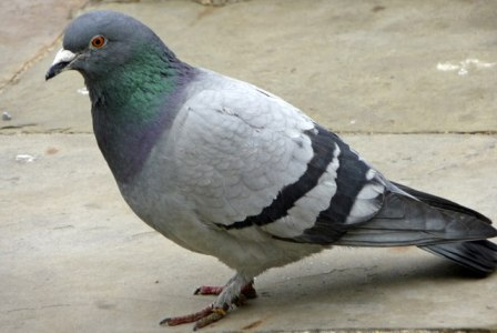 Google-Algorithm-Update-Pigeon-July-2014